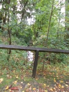 יובל מתחת לגשרון ביער