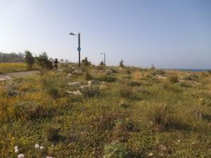 צמחיית חוף אביבית