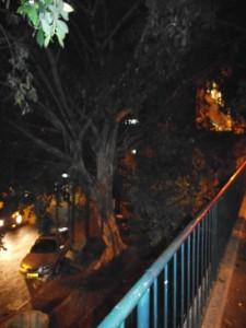 גן ציבורי ברחוב ארלוזורוב , בערב
