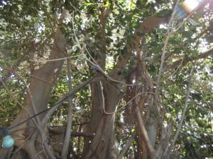 עץ שכו 6