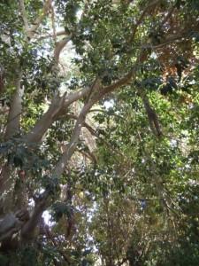 עץ שכן 11