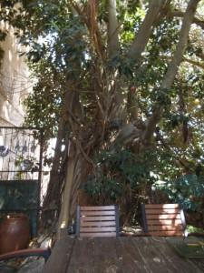 עץ שכן 2