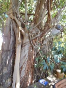 עץ שכן 4