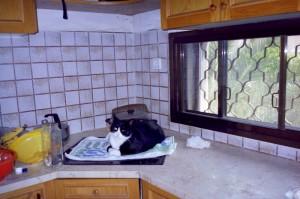 תמונה ישנה. חמודי שכבר מזמן לא איתנו אהב לשבת על הכיריים במטבח