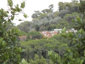 מעונות בטכניון טובלים בשלל ירוקים רחוצים בגשם