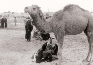 בידואי עם גמל בבאר שבע 1957