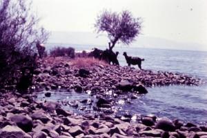 הארי כהן- חוף הכינרת 1963