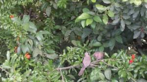 תמונה אביבית- צוצל מחזר אחרי צוצלת