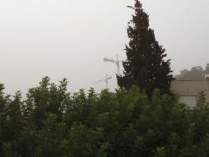 העגורנים בטכניון בסערה