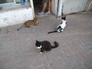 עוד כמה מלהקת חתולי השען