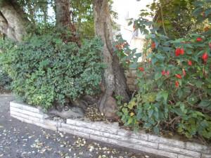 עץ וירק בשביל שעובר ליד הגן שמאחטרי בית רפפורט